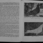 Ovidiu Leonte - Porumbeii galateni (63)