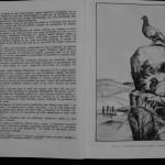 Ovidiu Leonte - Porumbeii galateni (8)