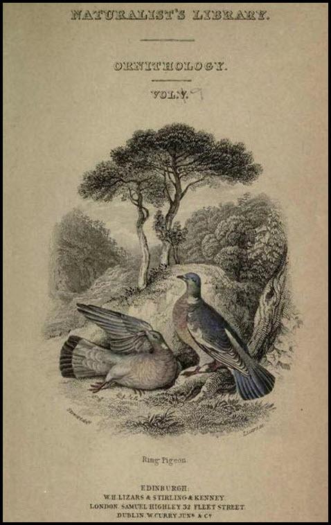 Pigeons by Prideaux John Selbycoperta