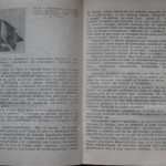 bolile porumbeilor (104)