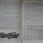 bolile porumbeilor (111)