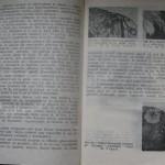 bolile porumbeilor (112)