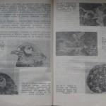 bolile porumbeilor (113)