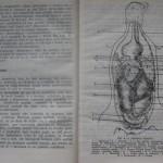 bolile porumbeilor (12)