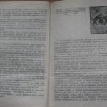 bolile porumbeilor (125)