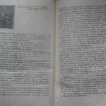bolile porumbeilor (126)