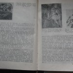 bolile porumbeilor (128)