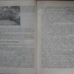 bolile porumbeilor (130)
