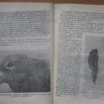 bolile porumbeilor (134)
