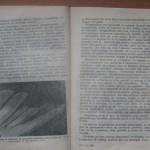 bolile porumbeilor (135)