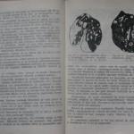 bolile porumbeilor (142)
