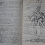 bolile porumbeilor (17)