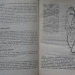 bolile porumbeilor (22)