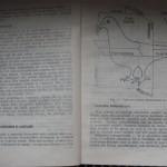 bolile porumbeilor (5)