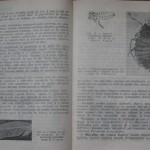 bolile porumbeilor (82)