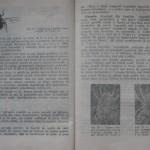 bolile porumbeilor (83)