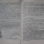 bolile porumbeilor (86)