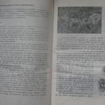 bolile porumbeilor (88)