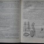 bolile porumbeilor (90)