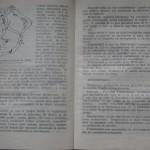 bolile porumbeilor (93)