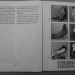 Farmecul columbofiliei - Feliciu Bonatiu (54)