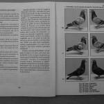 Farmecul columbofiliei - Feliciu Bonatiu (68)