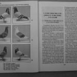 Farmecul columbofiliei - Feliciu Bonatiu (69)