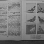 Farmecul columbofiliei - Feliciu Bonatiu (92)