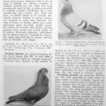 Peterfi Stefan - Cresterea porumbeilor (100)