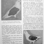Peterfi Stefan - Cresterea porumbeilor (101)