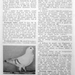 Peterfi Stefan - Cresterea porumbeilor (102)