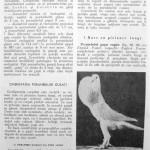 Peterfi Stefan - Cresterea porumbeilor (104)