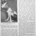 Peterfi Stefan - Cresterea porumbeilor (105)