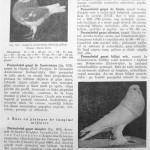 Peterfi Stefan - Cresterea porumbeilor (108)
