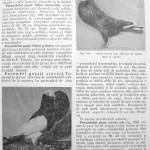 Peterfi Stefan - Cresterea porumbeilor (109)