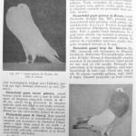 Peterfi Stefan - Cresterea porumbeilor (110)