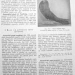 Peterfi Stefan - Cresterea porumbeilor (113)