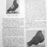 Peterfi Stefan - Cresterea porumbeilor (115)