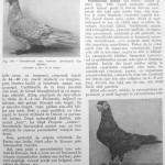 Peterfi Stefan - Cresterea porumbeilor (117)