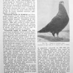 Peterfi Stefan - Cresterea porumbeilor (123)