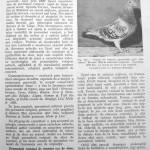 Peterfi Stefan - Cresterea porumbeilor (131)