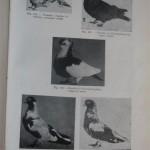 Peterfi Stefan - Cresterea porumbeilor (139)