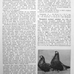 Peterfi Stefan - Cresterea porumbeilor (143)