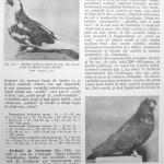 Peterfi Stefan - Cresterea porumbeilor (147)