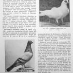 Peterfi Stefan - Cresterea porumbeilor (151)