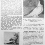 Peterfi Stefan - Cresterea porumbeilor (154)