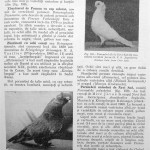 Peterfi Stefan - Cresterea porumbeilor (155)