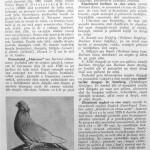 Peterfi Stefan - Cresterea porumbeilor (156)