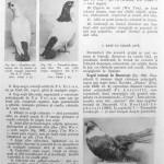 Peterfi Stefan - Cresterea porumbeilor (158)