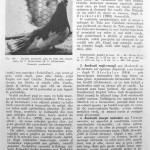 Peterfi Stefan - Cresterea porumbeilor (164)